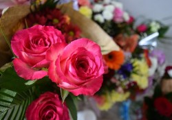 awesome-flowers-2481204__340